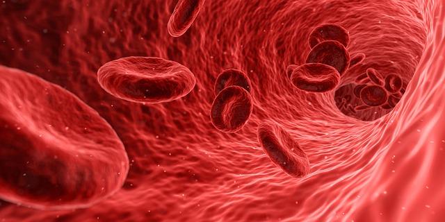 celule-sangvine
